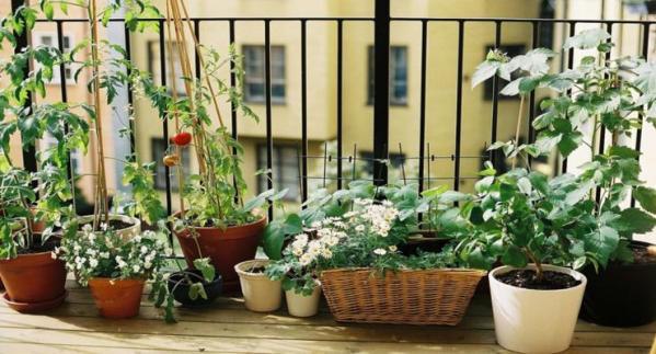 balcones-pequeños-macetas.plantas
